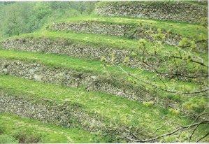 agricoltura e presidio del territorio